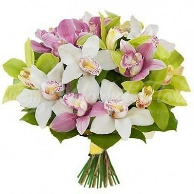 15 разноцветных орхидей